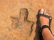 Dinosaur footprint Stock Image