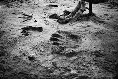 Dinosaur footprint and foot Stock Images