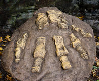 Dinosaur footprint Royalty Free Stock Image