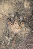 Dinosaur Footprints Stock Photography