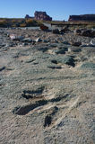 Dinosaur Footprints Royalty Free Stock Image