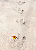 Dinosaur footprints Stock Images