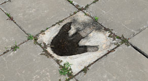 Dinosaur Footprints Stock Image