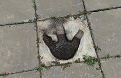 Dinosaur Footprints Royalty Free Stock Images