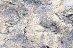 Dinosaur footprints Stock Photo