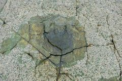 Dinosaur footprints on the rock at Goseong dinosaur museum, Sout stock images