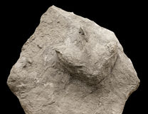 Dinosaur footprints Royalty Free Stock Photography