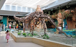 Dinosaur Fossil. Show in Gansu Museum, Lanzhou, Gansu province of China.Visiting Gansu Provincial Museum is a must for every visitor coming to Lanzhou on their Royalty Free Stock Photos