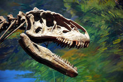 Dinosaur fossil Royalty Free Stock Image