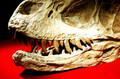 Dinosaur fossil Stock Photo