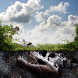 Dinosaur fossil buried in dirt. A large dinosaur head fossil with its nose sticking out of the dirt in a grassy field or yard royalty free stock photography
