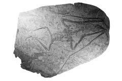 Dinosaur fossil royalty free stock image
