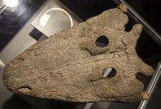 Dinosaur fossil - Parotosuchus Royalty Free Stock Photo