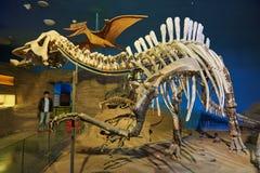 The dinosaur fossil Stock Photos