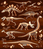 Dinosaur Fossils, Eggs, Bones Skeletons. Stock Photo