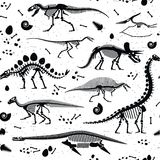Dinosaur Fossils, Eggs, Bones Skeletons. Royalty Free Stock Photo