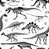 Dinosaur Fossils, Eggs, Bones Skeletons. Stock Image