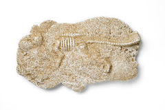 Dinosaur fossils Stock Images