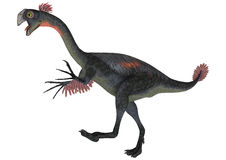 Dinosaur Gigantoraptor Stock Photo