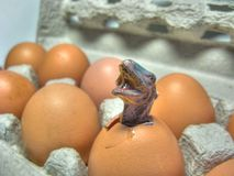 Dinosaur hatching from an egg. Dinosaur toy in the chicken egg macro Stock Photo
