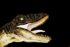 Dinosaur Head Stock Image