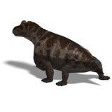 Dinosaur Keratocephalus Stock Images
