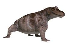 Dinosaur Keratocephalus Royalty Free Stock Images