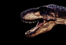 Dinosaur. Large dinosaur head on black background stock images