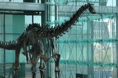 Dinosaur model Royalty Free Stock Photography