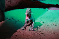 DINOSAUR MODEL. This is a model of prehistorical animal Stock Image