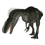 Dinosaur Monolophosaurus Royalty Free Stock Photography