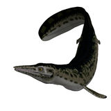 Dinosaur Mosasaur. Underwater dinosaur Mosasaur. 3D render with clipping path and shadow over white vector illustration