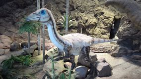 Dinosaur. In the  museum stock video footage