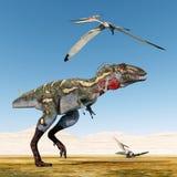Dinosaur Nanotyrannus and Pterosaur Pteranodon Stock Image