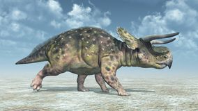 Dinosaur Nasutoceratops. Computer generated 3D illustration with the dinosaur Nasutoceratops in a landscape Royalty Free Stock Photos