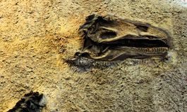 Dinosaur National Monument wall dino bones. Dinosaur national monument dinosaur bones background royalty free stock photos