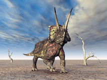 Dinosaur Pentaceratops Royalty Free Stock Photos