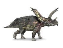 Dinosaur Pentaceratops Stock Images