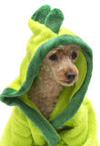 Dinosaur Poodle Stock Photo
