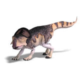 Dinosaur Protoceratops Royalty Free Stock Images