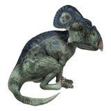 Dinosaur Protoceratops Royalty Free Stock Photo