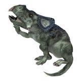 Dinosaur Protoceratops Royalty Free Stock Images