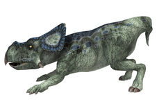 Dinosaur Protoceratops Royalty Free Stock Photo