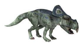 Dinosaur Protoceratops Royalty Free Stock Photos