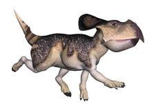 Dinosaur Protoceratops Stock Photography