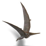 Dinosaur Pteranodon. Flying dinosuar Pteranodon. 3D render with clipping path and shadow over white Royalty Free Stock Photos