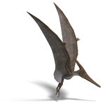 Dinosaur Pteranodon. Flying dinosuar Pteranodon. 3D render with clipping path and shadow over white Royalty Free Stock Photography