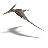 Dinosaur Pteranodon. Flying dinosuar Pteranodon. 3D render with clipping path and shadow over white Royalty Free Stock Image