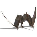 Dinosaur Pteranodon Stock Images