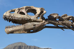 Dinosaur's head skull and blue sky, Ischigualasto Stock Photo